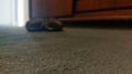 alfombras pelo cortado